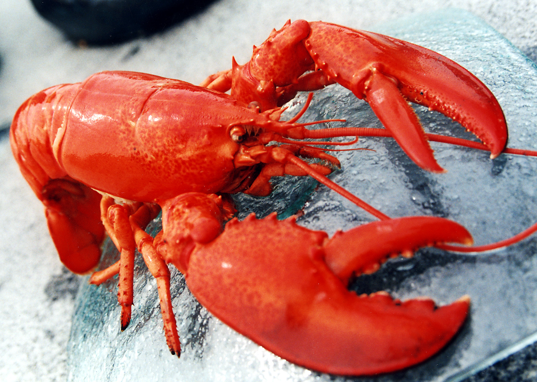cheapeats inc blog where can i find a good lobster